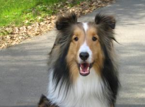 CADIRI Puppy cursus Basis cursus
