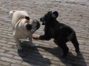 CADIRI Puppy socialisatie