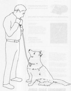 Ideale lengte hondenriem