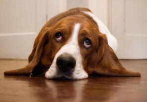 Hondenschool Gastgezin