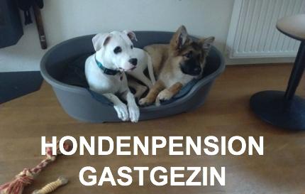 Hondenpension Gastgezin Woubrugge