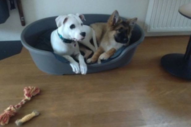 CADIRI Gastgezin Hondenpension