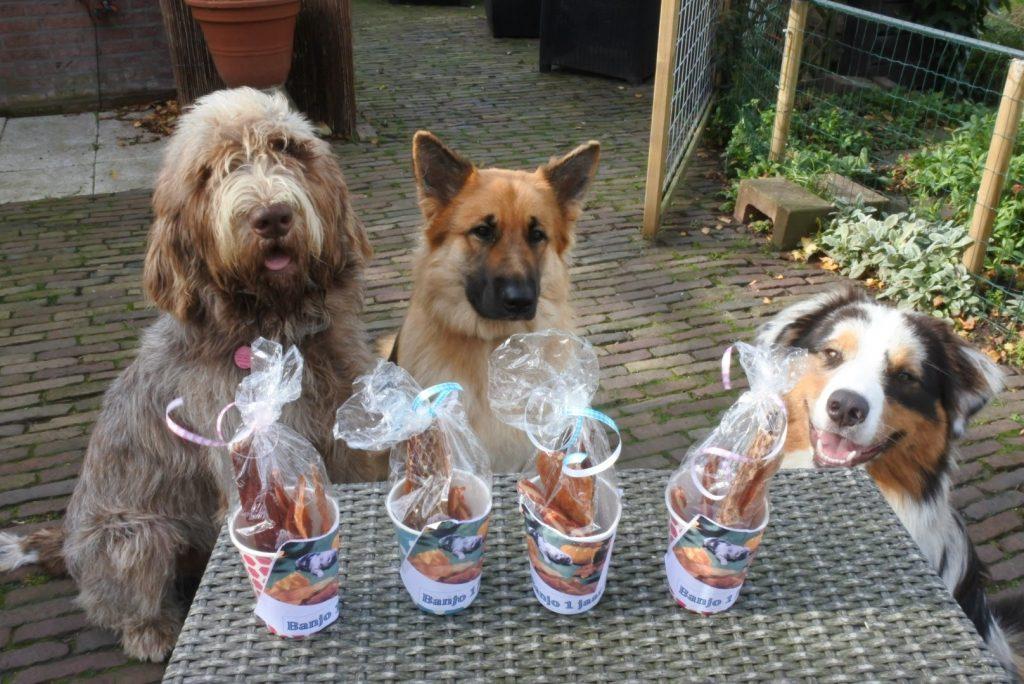 Hondenpension Woubrugge